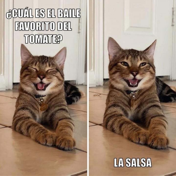 Miáucoles: Gato Cómico: ¿Cuál es el baile favorito del tomate?