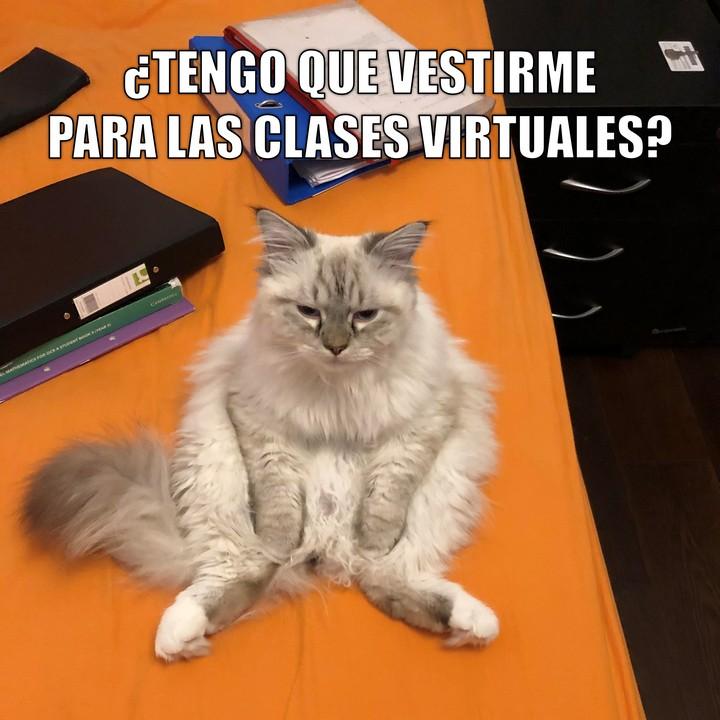 Miáucoles: ¿Tengo que vestirme para las clases virtuales?