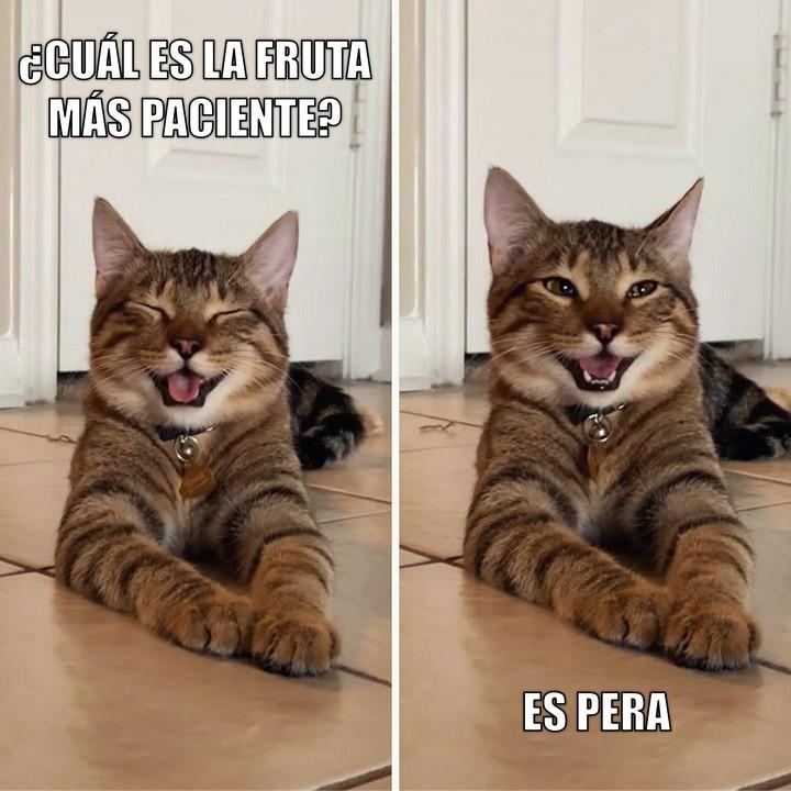 Miáucoles: Gato Cómico: ¿Cuál es la fruta más paciente?