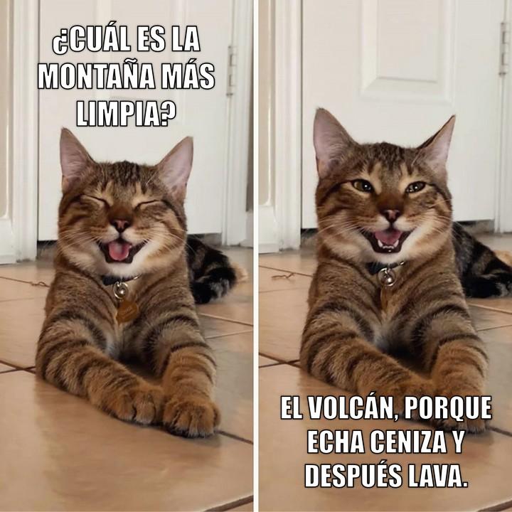 Miáucoles: Gato Cómico: ¿Cuál es la montaña más limpia?