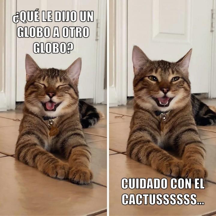 Miáucoles: Gato Cómico: ¿Qué le dijo un globo a otro globo?