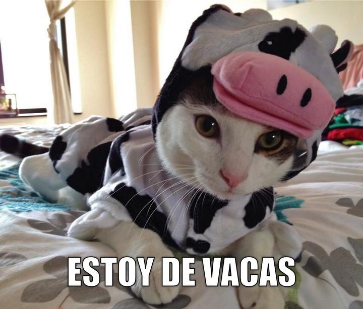 Miáucoles: Estoy de vacas