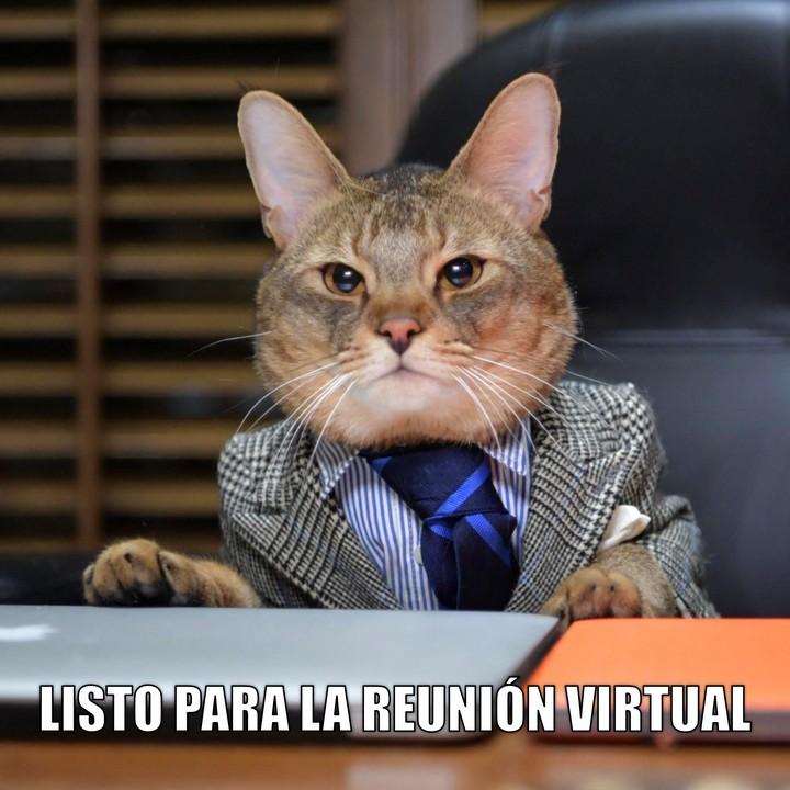 Miáucoles: Listo para la reunión virtual