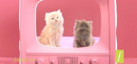 Los gatos me encantan... las rebajas de Falabella más