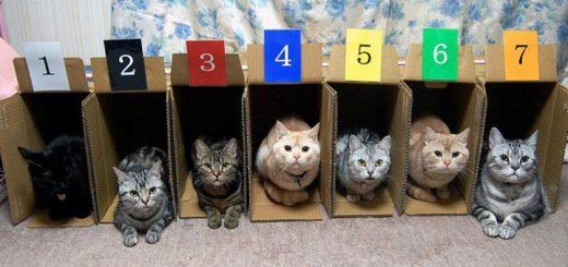 Aprende los colores y los números con gatos
