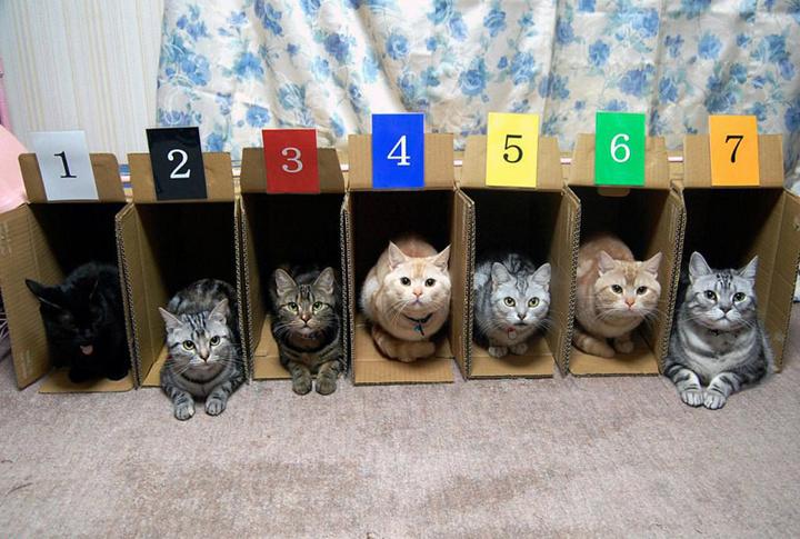 Aprender los números y los colores con gatos