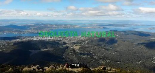 Salomón Beda - Orquesta natural