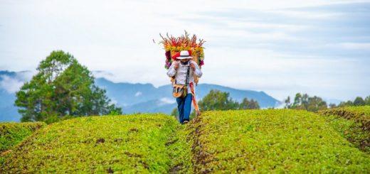Alcaldía de Medellín – Volveremos a florecer