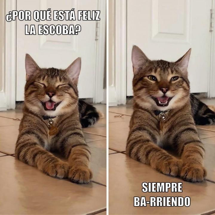 Miáucoles: Gato Cómico: ¿Por qué está feliz la escoba?