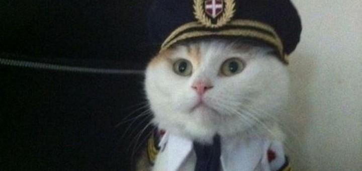 Yo no soy marinero, soy capitán